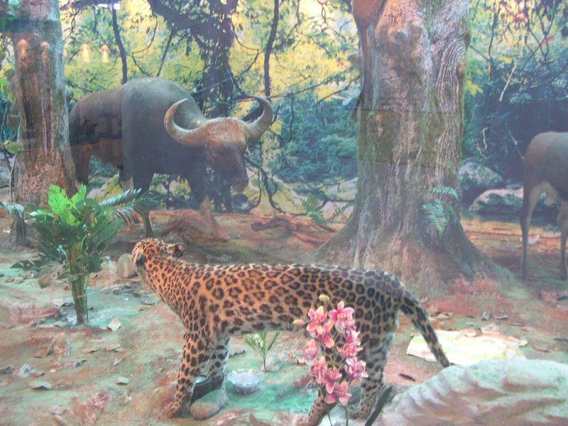 热带雨林自然保护区
