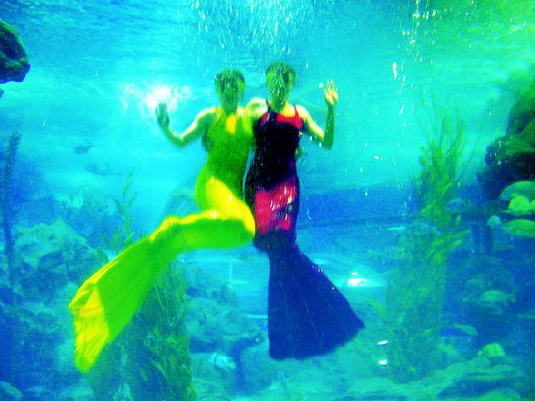 青岛旅游景点 青岛海底世界旅游景点  青岛海底世界 美图 城市旅游