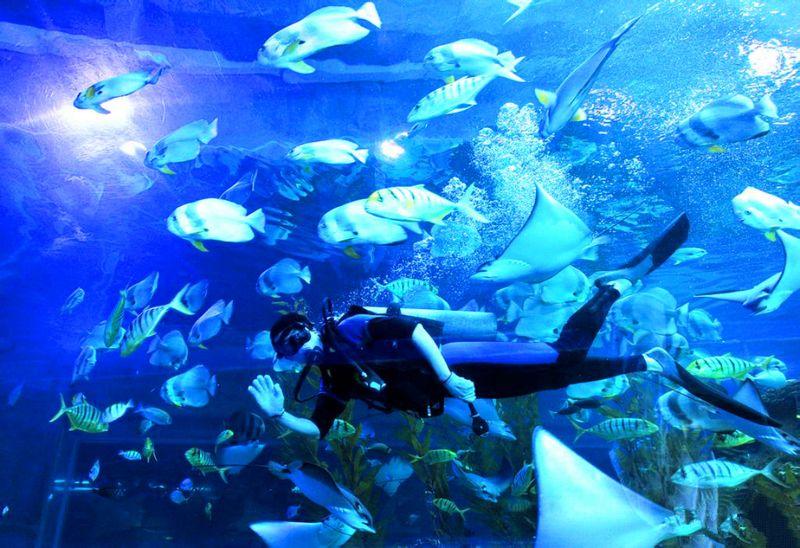 简介: 皇家极地海洋世界由马来西亚建荣国际集团独家投资,1.5亿美元、占地600亩。是目前亚洲最大的皇家极地海洋世界大型游乐项目。皇家极地海洋世界游览项目包括:极地动物展示区,白鲸特展区,鲨鱼博士区,海洋科普课堂,四大主题海底隧道,珍奇爬虫区,风情热带雨林区,互动投喂区(鲨鱼,象鱼,海豹)奇幻海底表演区,海兽区,海豚表演馆,俄罗斯水上芭蕾,时尚精品店,美食一条街,儿童游乐区,游艇码头等15个展区,将展出有白鲸,海象,鲨鱼,北极熊等大型海洋动物10多个品种100多头,各种海洋鱼类300多种2万余尾.总注水量