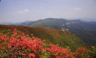 阳明山国家森林公园旅游-阳明山国家森林公园旅游图片