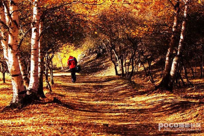 秋天树木的变化
