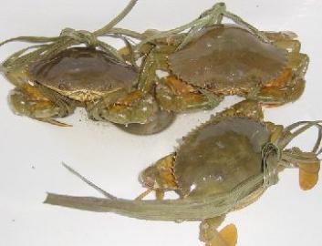 螃蟹的清洗的步骤图解